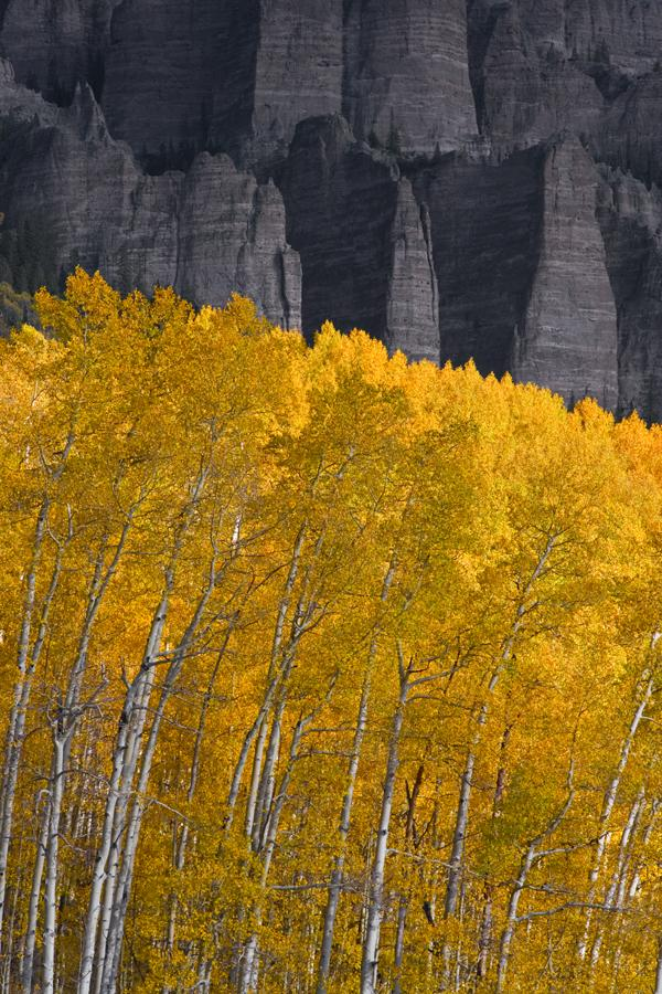 Aspen trees against rock pinnacles Uncompahgre National Forest outside of Ridgway, Colorado composition