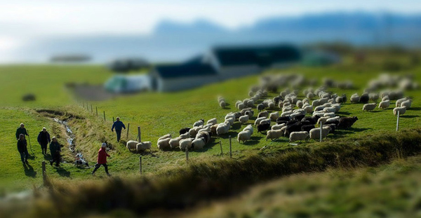 Tilt shift effect applied in Photoshop CS6 to a sheep herding shot captured in Eastern Iceland by Layne Kennedy rural countryside
