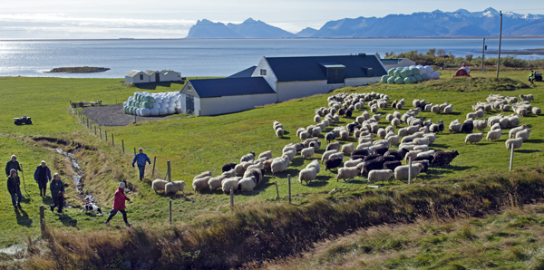 sheep herding farmers in Easter Iceland
