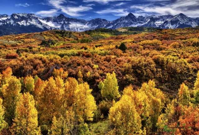 Colorful Fall In Colorado by Wendy Gedack