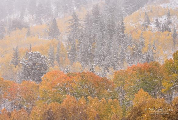 Aspens and pines in an autumn snowstorm, Toiyabe NF, CA, USA; 1/8 sec at f/22, ISO 50
