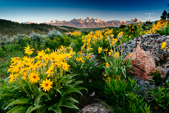 Tetons Mountains Wyoming Jackson Summer by Jay Goodrich