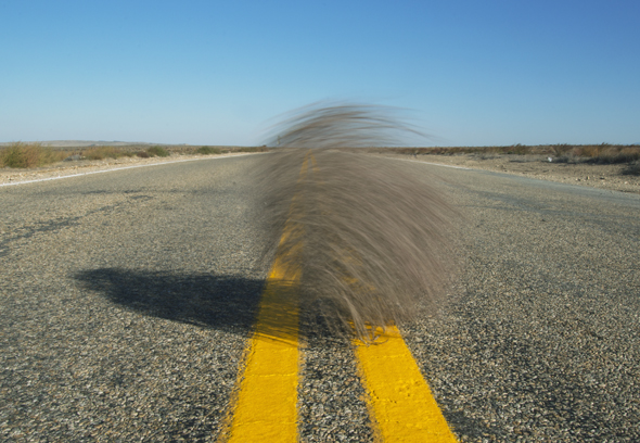 Tumbleweed blows acrss highway, Idaho