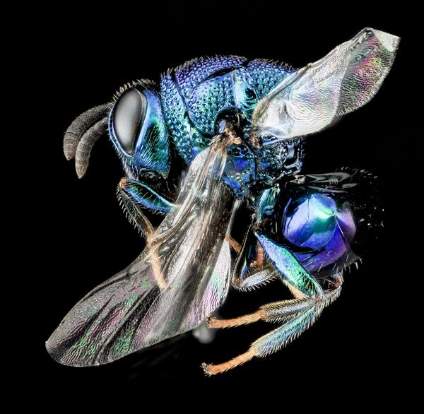 focus stacking stacked composite macro insect photography