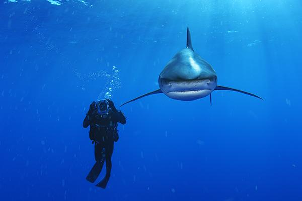 Oceanic-Whitetip-by-Brian-Skerry