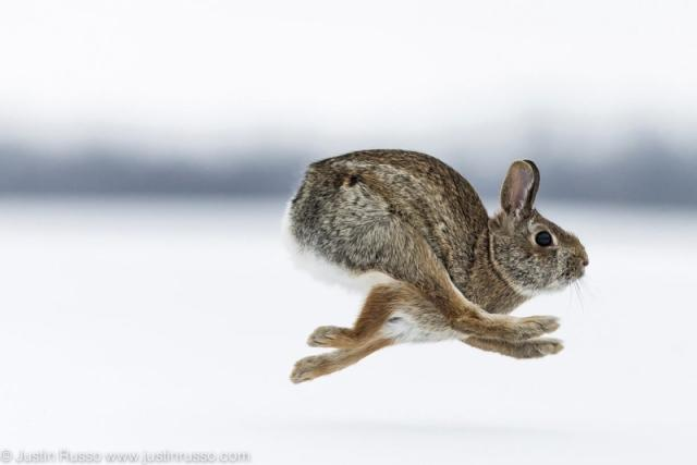 'Rabbit Run' by Justin Russo