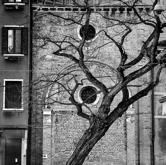 City-tree_IT_VEN_019_D_bis_b