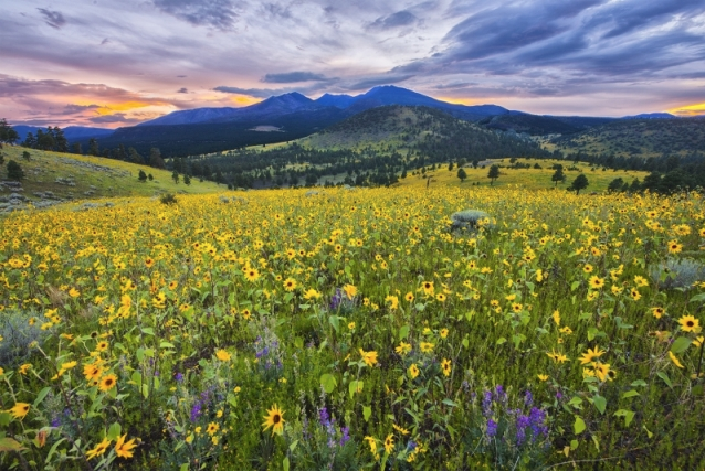 Wildflower Sunset by Kathleen Wasselle Croft