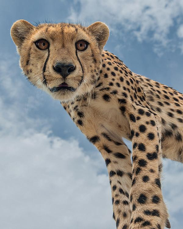 Looking-Down-On-Life-by-Marc-Mol