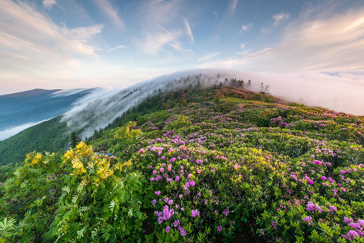 'Grassy Ridge Rhododendron Fog Roll' by Mark VanDyke