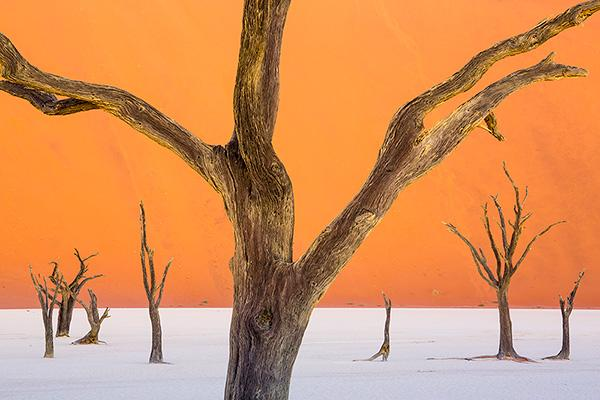 Deadvlei-at-twilight,-Namib-Naukluft-National-Park,-Namibia