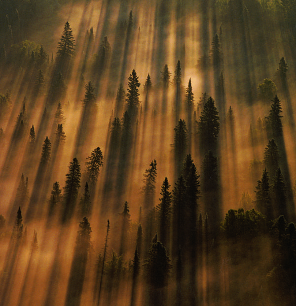 STUNNING PHOTOGRAPHS National Geographic. Photo by Annie Griffiths/National Geographic Creative Minnesota Morning sunlight burns through fog over Superior National forest.