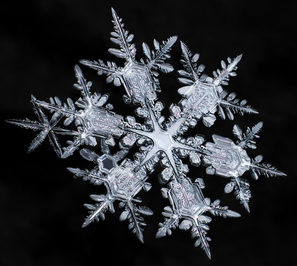 Macro close-up of snowflake crystals highly detailed black background focus stacking multiple exposure