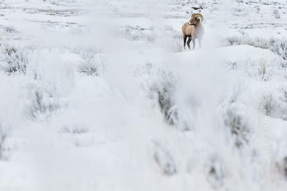 Bighorn-Winter-Wyoming-1
