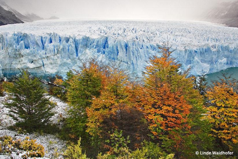 Ñirre trees in front of the Perito Moreno Glacier, one of the signal attractions of the Glacier National Park (Parque Nacional los Glaciares) in Argentine Patagonia, and one of the few glaciers in the world that is advancing, not retreating. The wall of ice at the glacier's end is 200 to 300 feet tall. Here, an overnight snowfall is beginning to melt but the overcast cloudy sky provides soft even lighting with no contrast problems. I stopped down just enough to hold detail in both the trees and the ice. 1/160 at ƒ11, ISO 640, 28mm (28-135 mm lens), hand held.