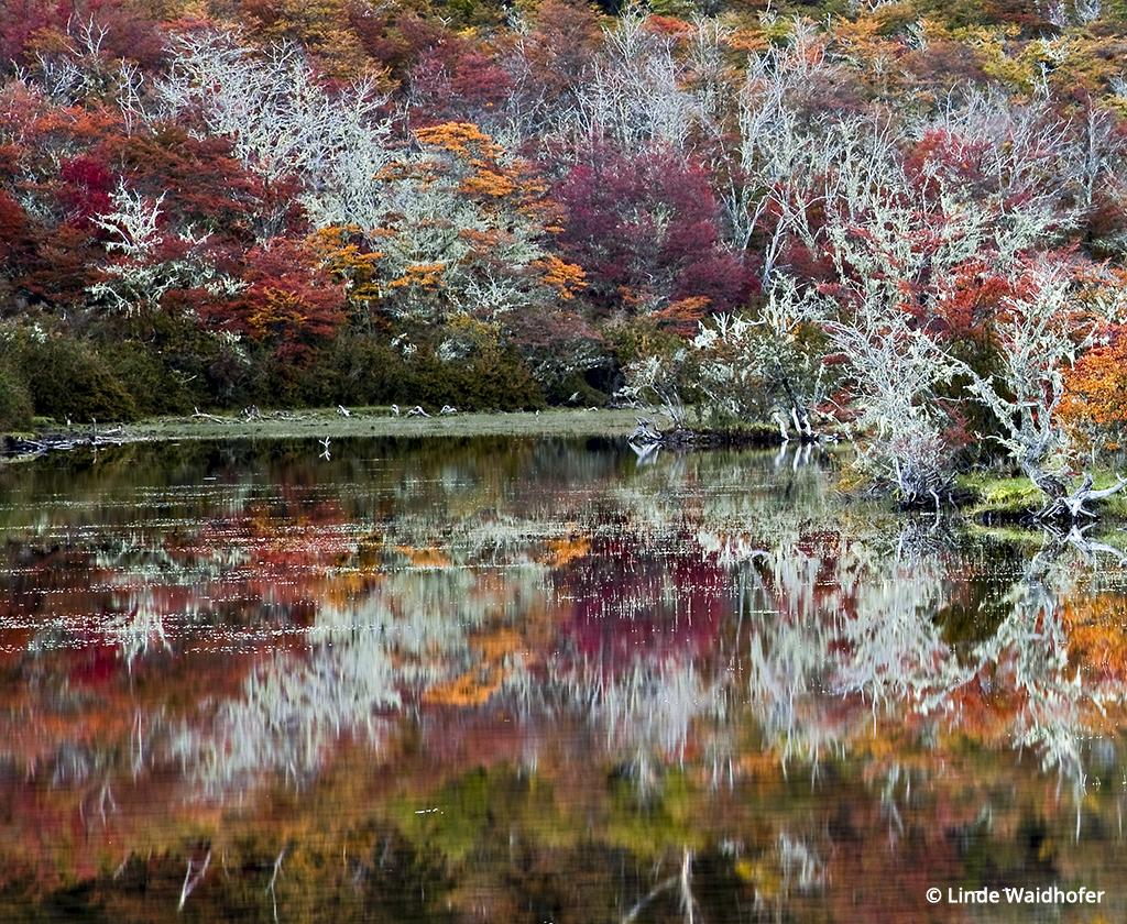 This Ñirre forest reflected in a still pond (called a mallín) in Chilean Patagonia was shot in the alpenglow about twenty minutes after sunset when the colors briefly become luminous from reflected sunset light. 2.5 sec at ƒ/22, ISO 100, 105mm (24-105mm lens) on a tripod.