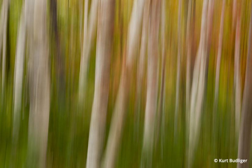 Tip 5: With a shutter speed of a half second the camer was moved up and down during the exposure to create a more painterly, abstract image. Acadia NP, Maine