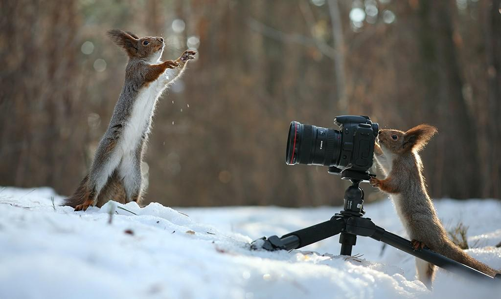 Last_Frame_Squirrel_web-1024x612