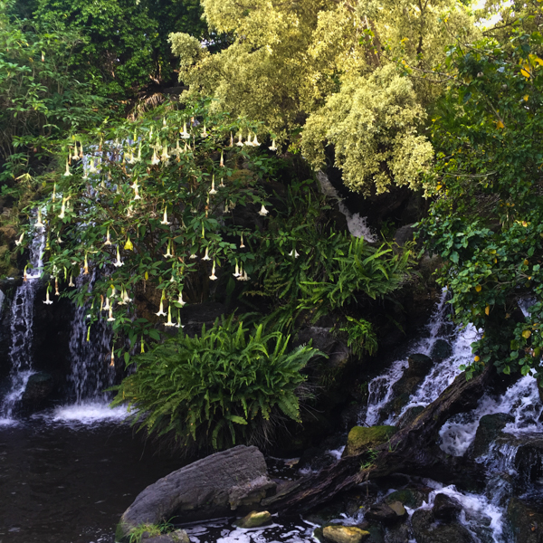 Waterfall framed by lush foliage. iPhone 6. Photo by Victoria Sullivan.