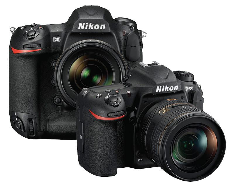 Top DSLRs For Wildlife