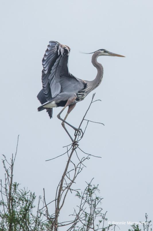 "Today's Photo Of The Day is ""Balancing Act"" by Bonnie Marquette. Location: Baton Rouge, Louisiana."