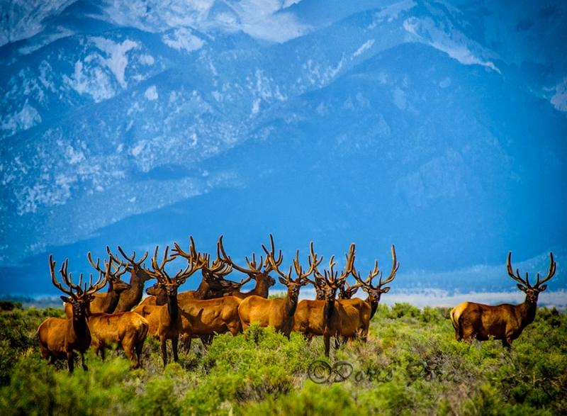 "Today's Photo Of The Day is ""Lots Of Antlers"" by Doris Ford. Location: Great Sand Dunes National Park and Preserve, Colorado."