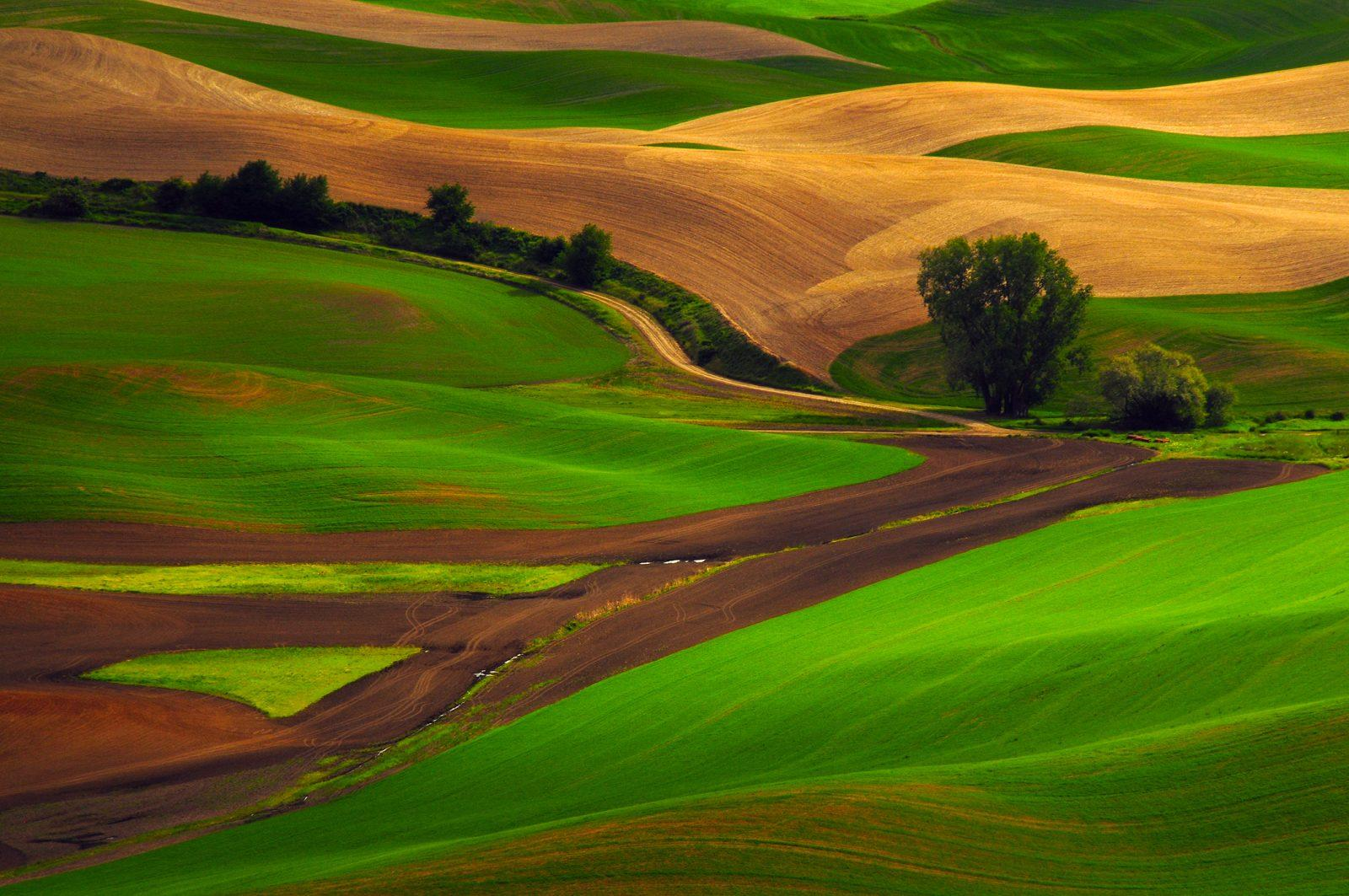 "Today's Photo Of The Day is ""The Palouse From Steptoe Butte"" by Michel Hersen. Location: Steptoe Butte State Park, Washington."