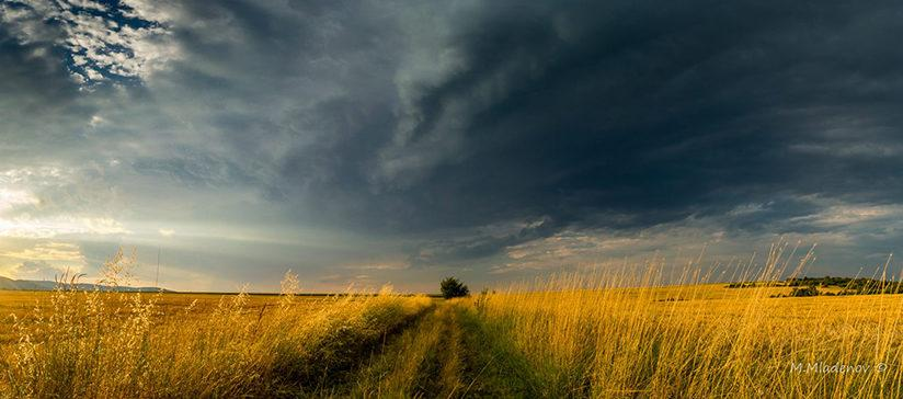 """Today's Photo Of The Day is """"Alone In The Field"""" by Milen Mladenov. Location: Varbovchets, Bulgaria."""