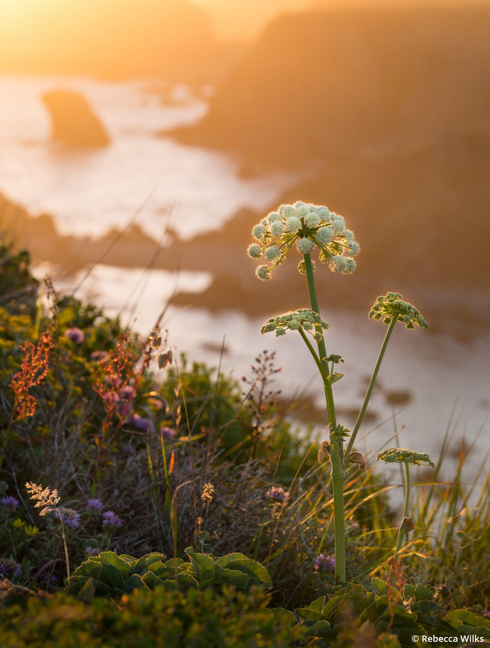 "Today's Photo Of The Day is ""Jenner Sunset"" by Rebecca Wilks. Location: Jenner, CA."