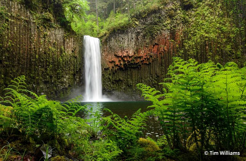 "Today's Photo Of The Day is ""Spring Awakening At Abiqua"" by Tim Williams. Location: Abiqua Falls, Oregon."