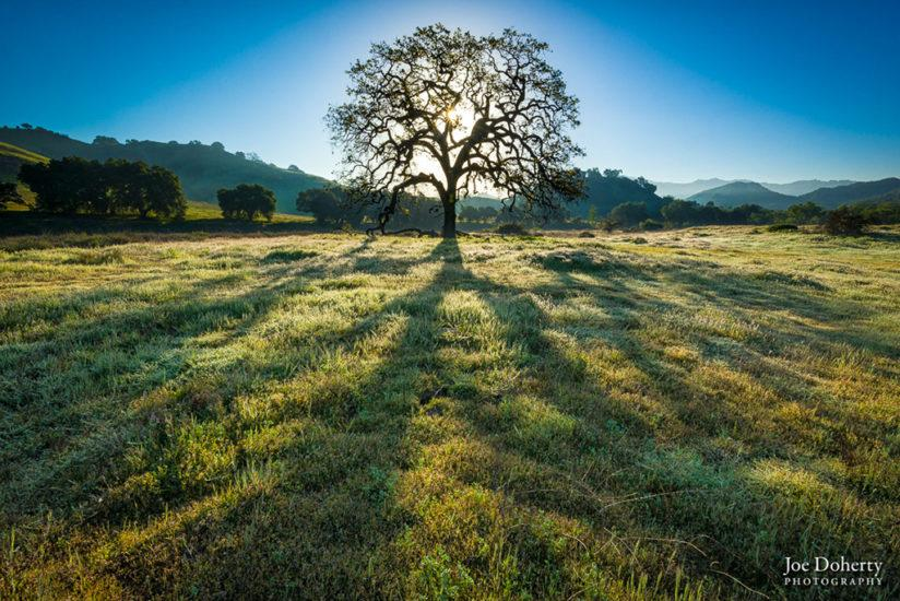 "Today's Photo Of The Day is ""Tree of Life"" by Joseph Doherty. Location: Malibu Creek State Park in the Santa Monica Mountains National Recreation Area, Los Angeles, CA."
