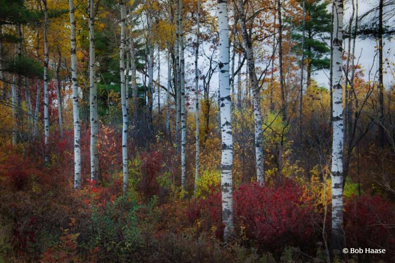 "Today's Photo Of The Day is ""Accents Of Fall"" by Bob Haase. Location: Hazerhurst, Wisconsin."