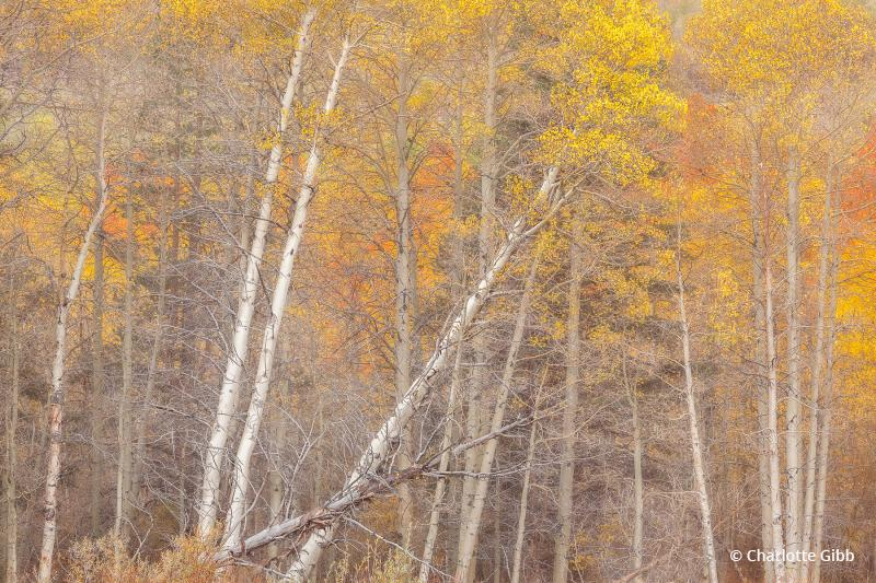 "Today's Photo Of The Day is ""Autumn Tango"" by Charlotte Gibb. Location: Eastern Sierra Nevada Mountain Range, California."