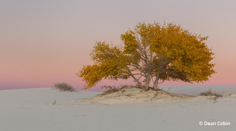 "Today's Photo Of The Day is ""White Sands Fall Color"" by Dean Cobin. Location: White Sands National Monument, New Mexico."