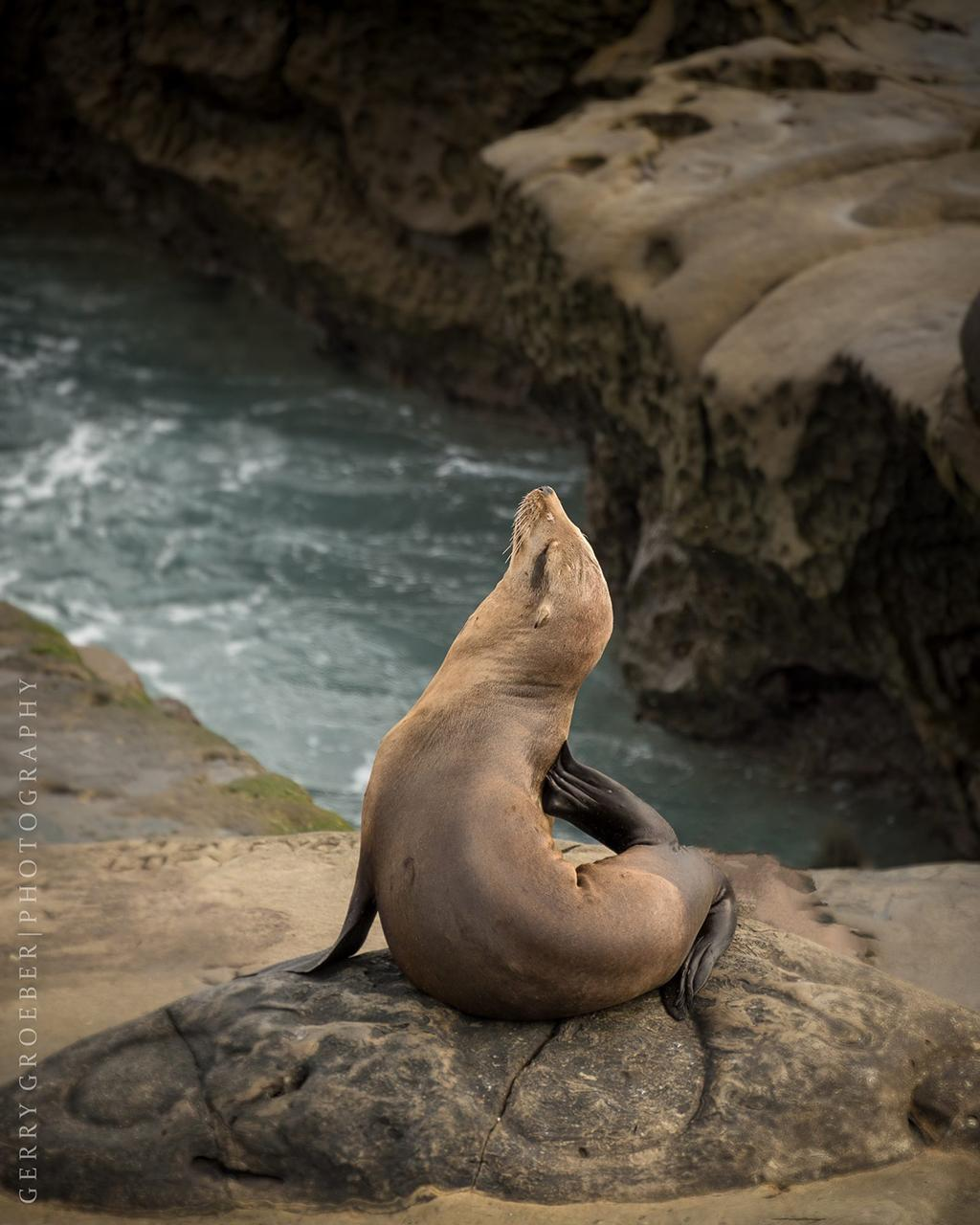 "Today's Photo Of The Day is ""Showing Off"" by Gerry Groeber. Location: La Jolla Cove, California."