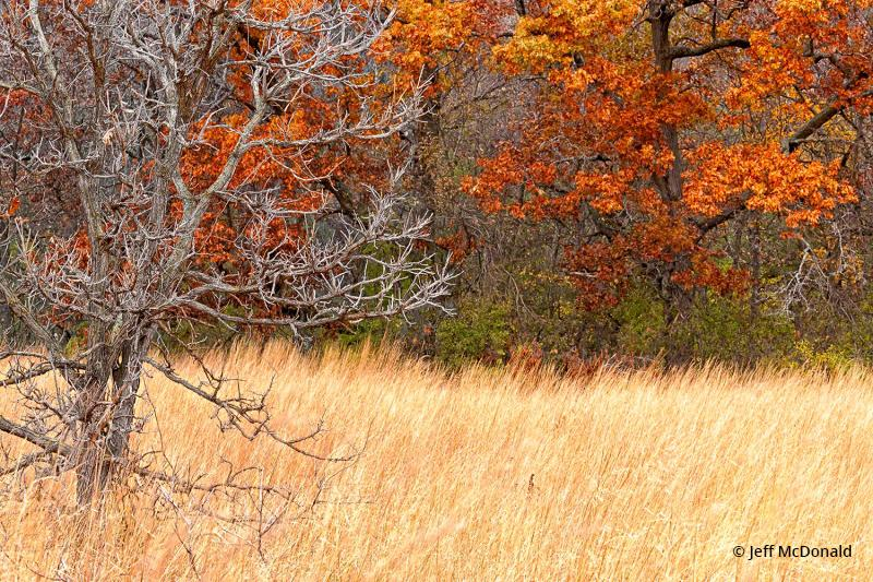 Today's Photo Of The Day is Autumn Meadow by Jeff McDonald. Location: Kettle Moraine State Forest, Eagle, Wisconsin.
