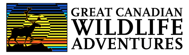 Great Canadian Wildlife Adventures