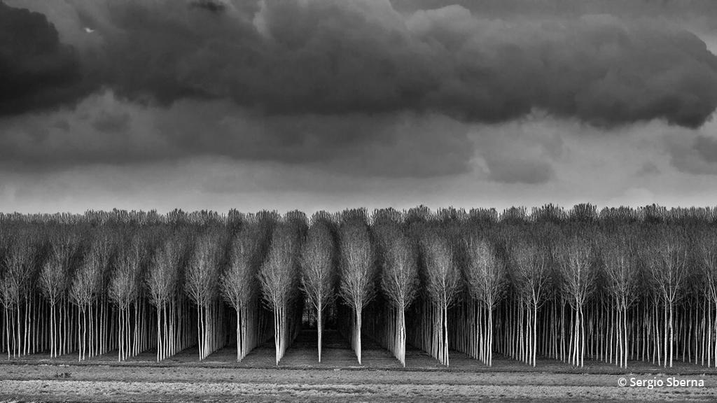 "Today's Photo Of The Day is ""Poplars In Review"" Sergio Sberna"