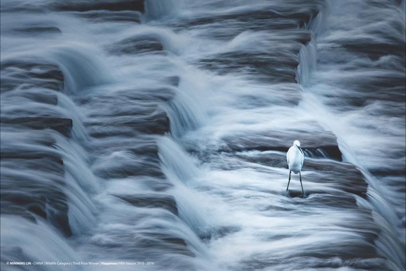 "Last year's 3rd place winner in the HIPA ""Wildlife Category"" was taken by Minming Lin (China). ""Water flows steadily from a reservoir, collecting all but the most determined in its dream-like stream."""