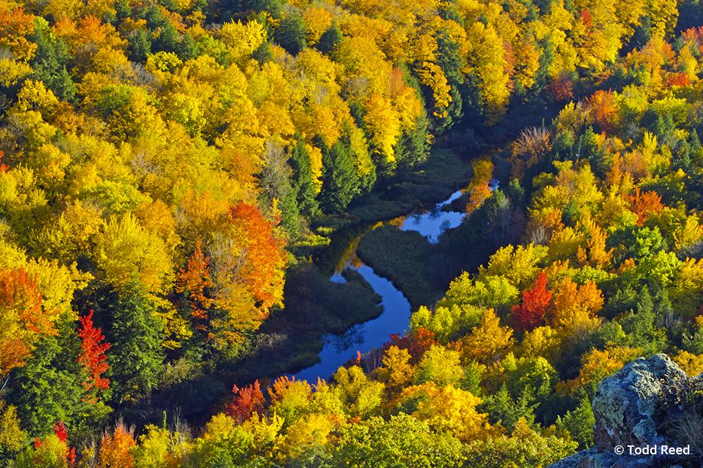 Peak Color Michigan