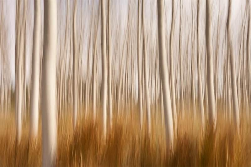 "Congratulations to David Frutos for winning the recent Motion Blur assignment with his image, ""Spring Impressions in a Poplar Field."""