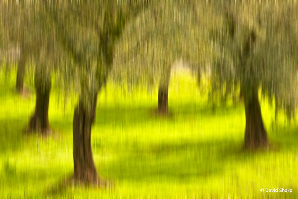 Today's Photo Of The Day is Olive Grove Dreams by David Sharp. Location: Sonoma Valley, CA.