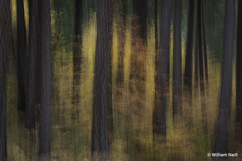 """""""Dogwood and Forest,"""" Yosemite National Park, California, 2013. Canon EOS-1Ds Mark III, Canon EF 24-105mm f/4L IS USM. Exposure: 0.3 sec., ƒ/8, ISO 100."""