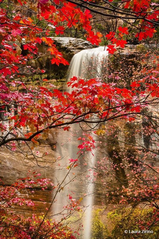 Today's Photo Of The Day is Waterfall And Maple Leaves by Laura Zirino. Location: Zion National Park, Utah.