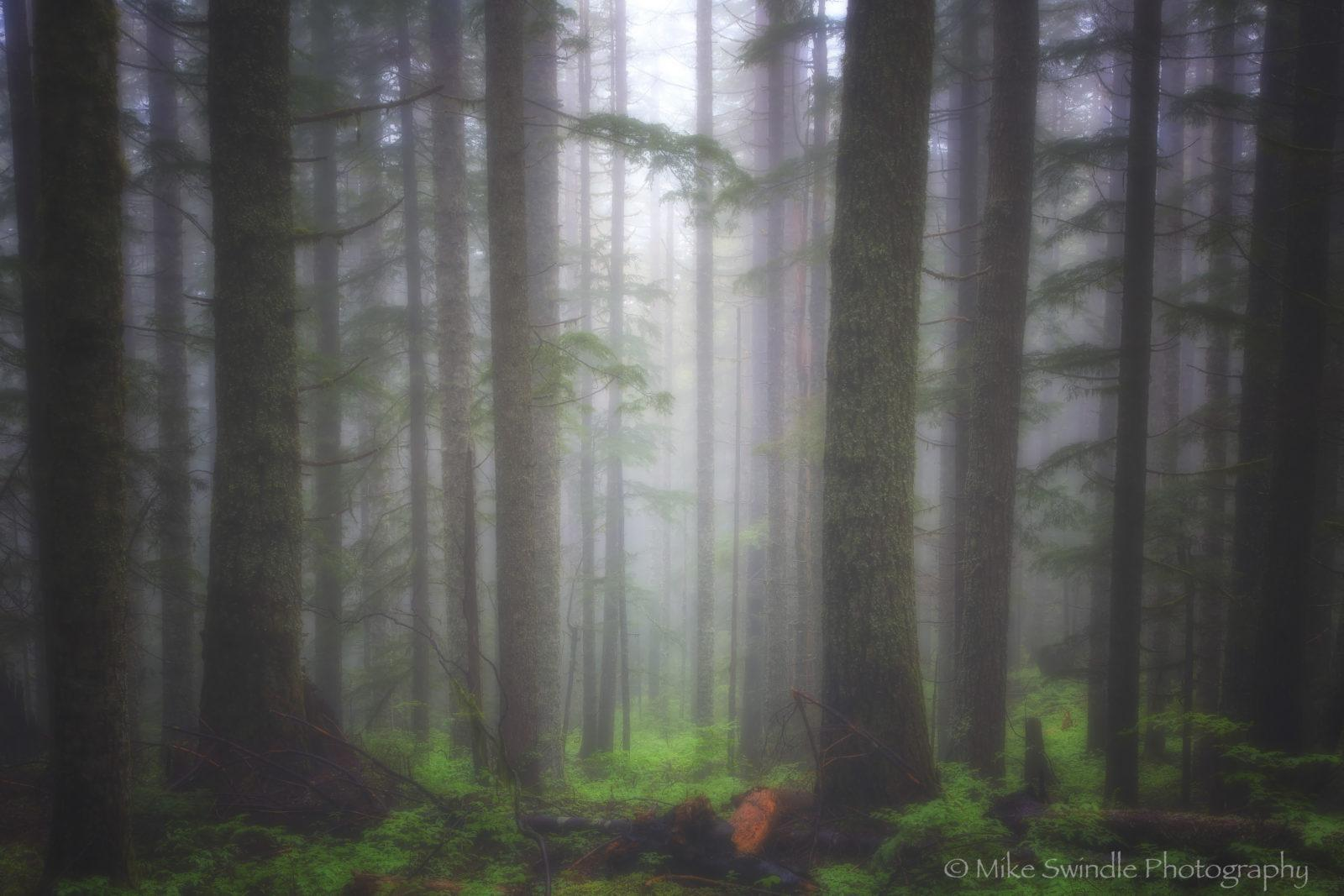 Today's Photo Of The Day is Foggy Forest by Michael Swindle. Location: Columbia River Gorge, Oregon.