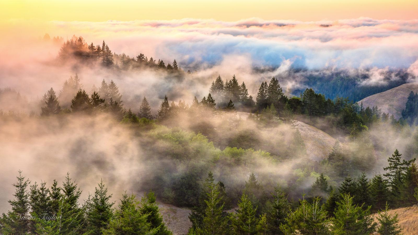 Today's Photo Of The Day is Coastal Fog Over Mount Tamalpais by Susan Taylor. Location: Mount Tamalpais State Park, CA.