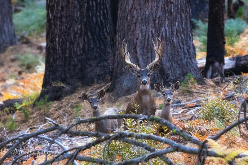 Today's Photo Of The Day is Autumn in the Yosemite High Country by Vincent Bonafede.
