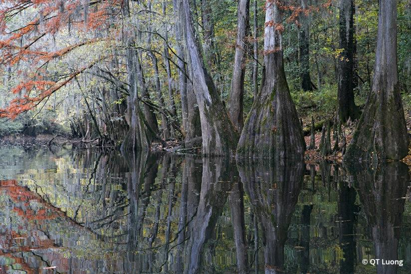 National Parks Fall Foliage Congaree