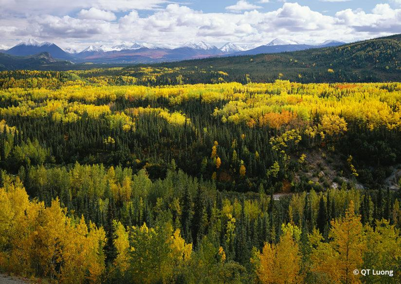 National Parks Fall Foliage Denali