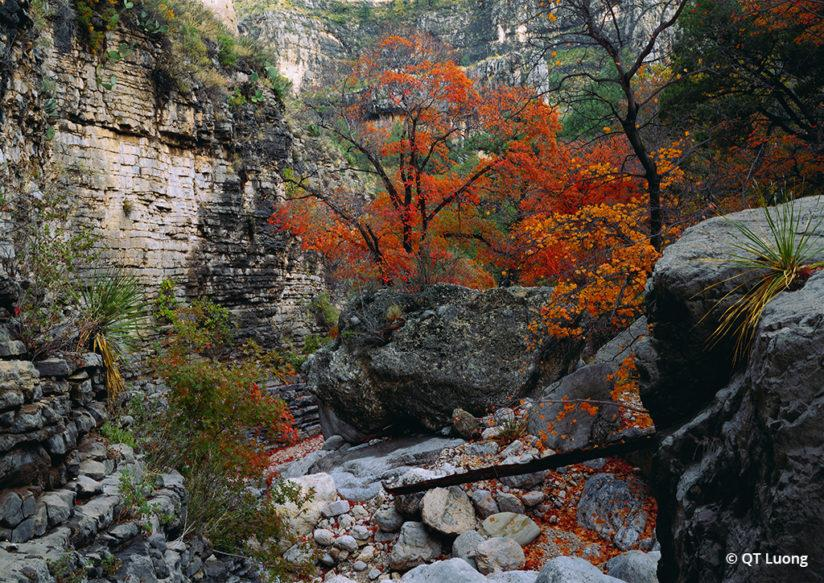 National Parks Fall Foliage Guadalupe Mountains